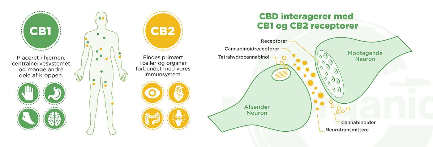 Hvad er CBD?